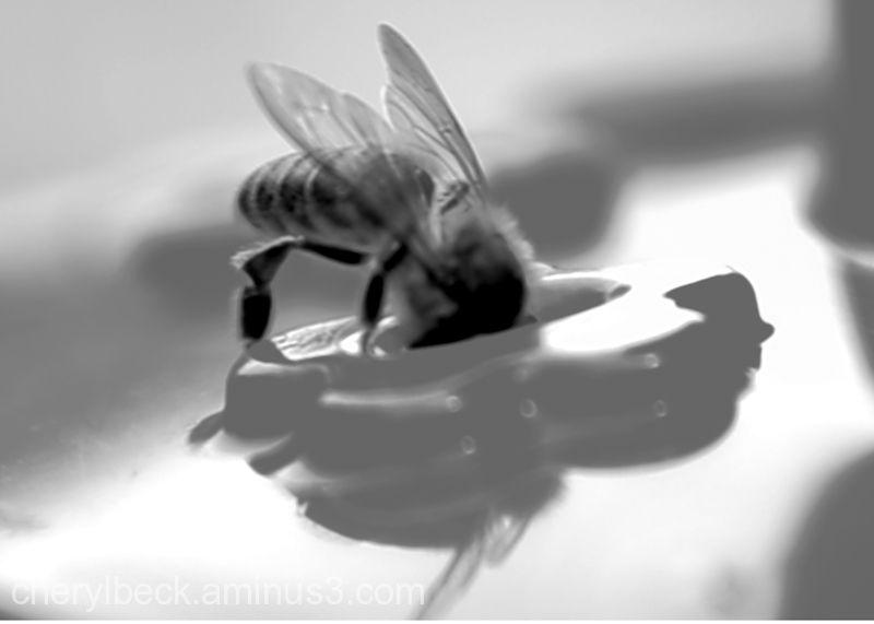 bumble bee at hummingbird feeder