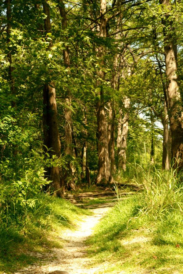 Cypress path