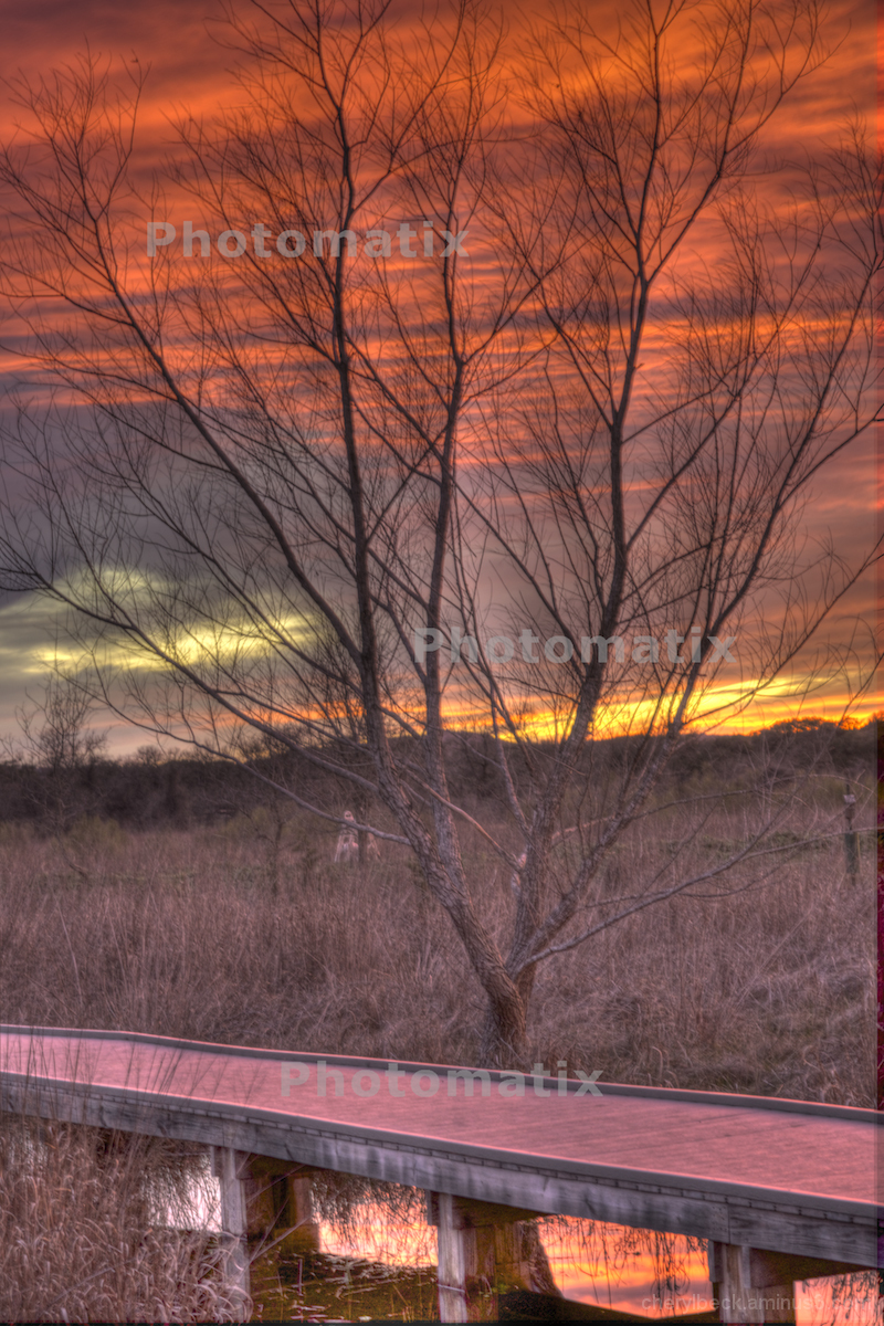 Marshy Sunset