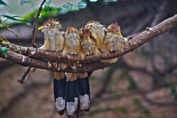 family of birds perched on branch