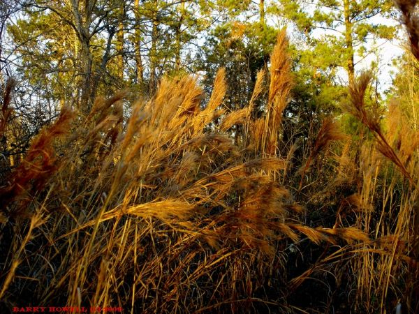 Last of the winter grass
