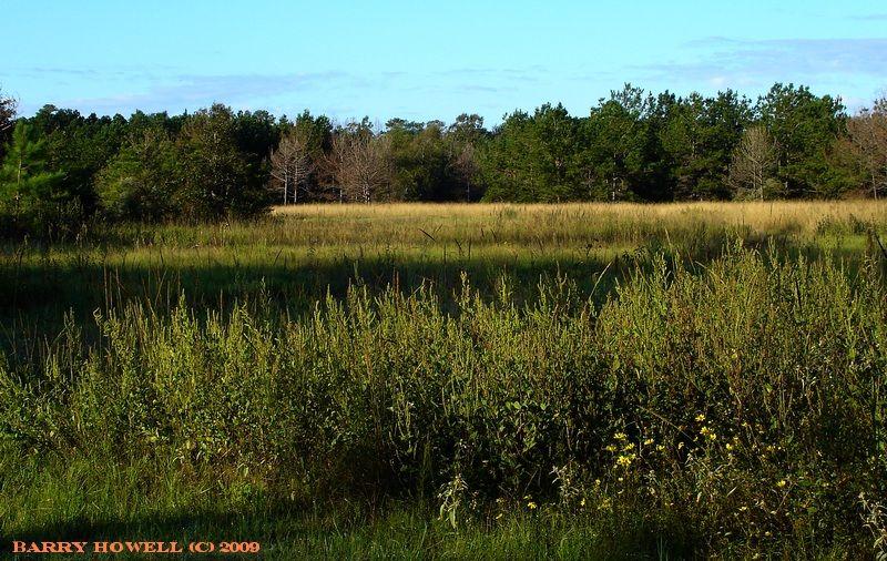 East End Meadow