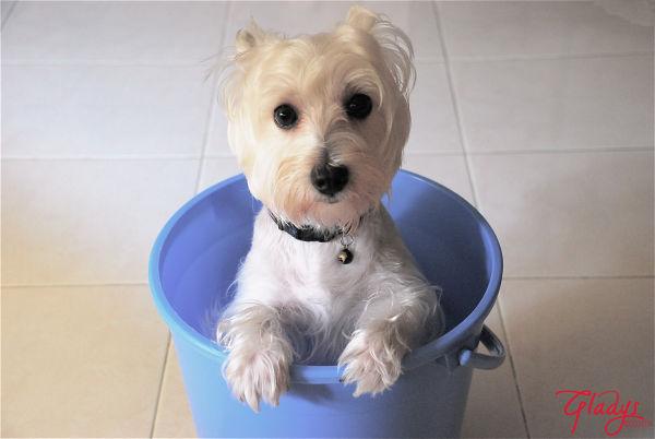 dog.in.a.bucket