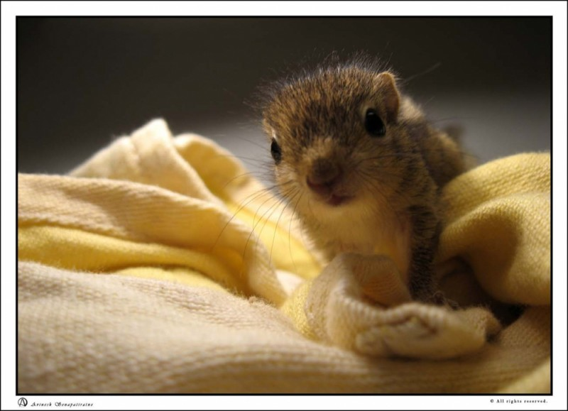 pet squirll