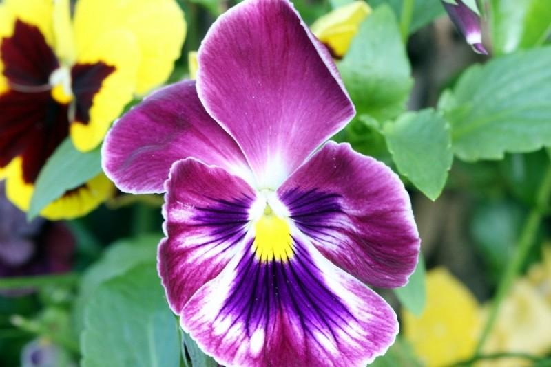 courtyard flower