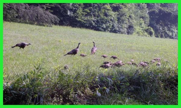 a sucsessful breeding season