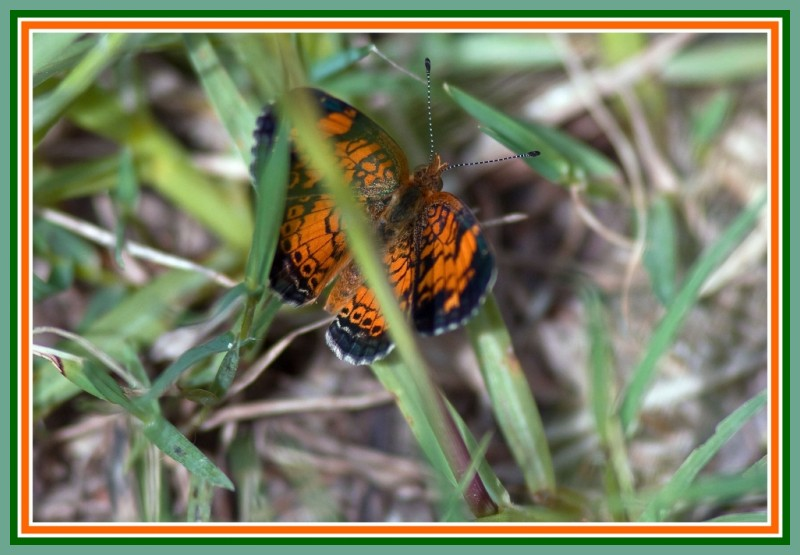 small butterfly in the grass