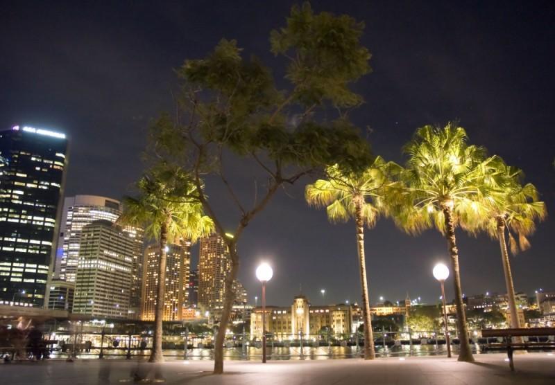 Palm Trees at Circular Quay