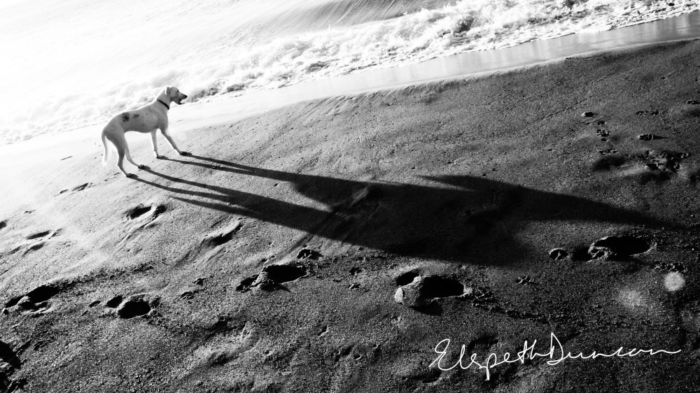Venus and early morning shadow on Turtle Beach