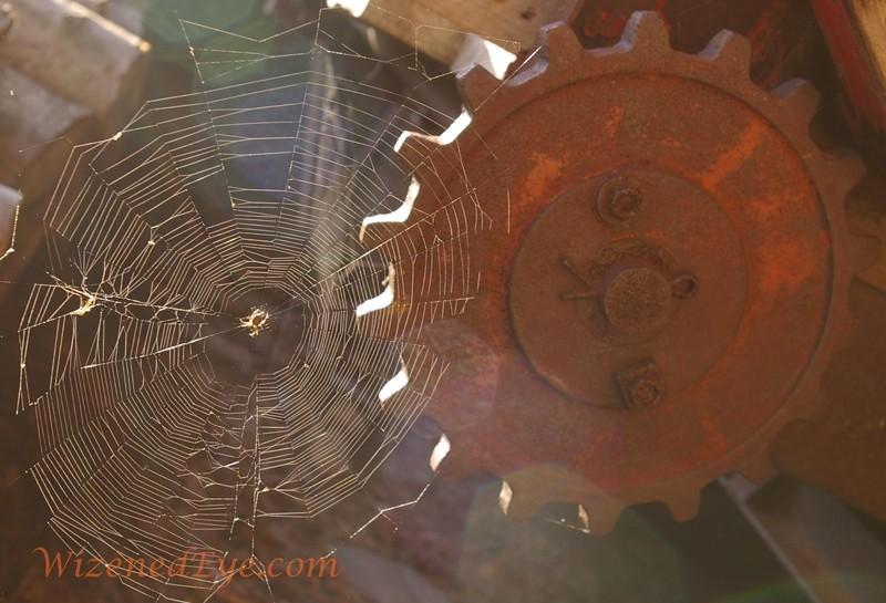 spider web design art imitates life