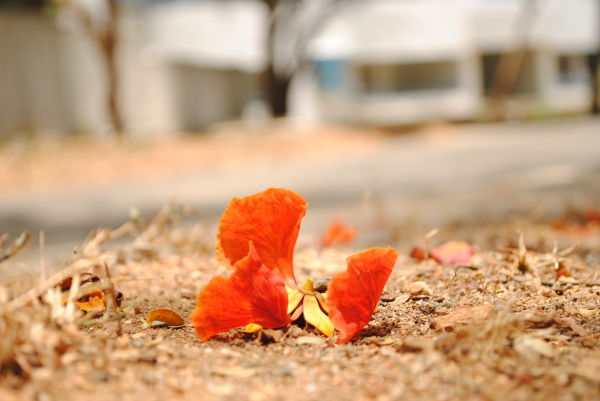 Hyderabad Reds