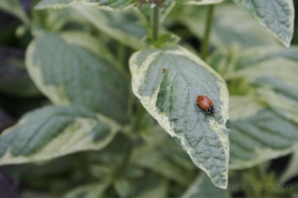 Ladybug and the leaf