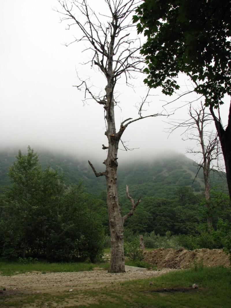 Golestan forest, North of Iran
