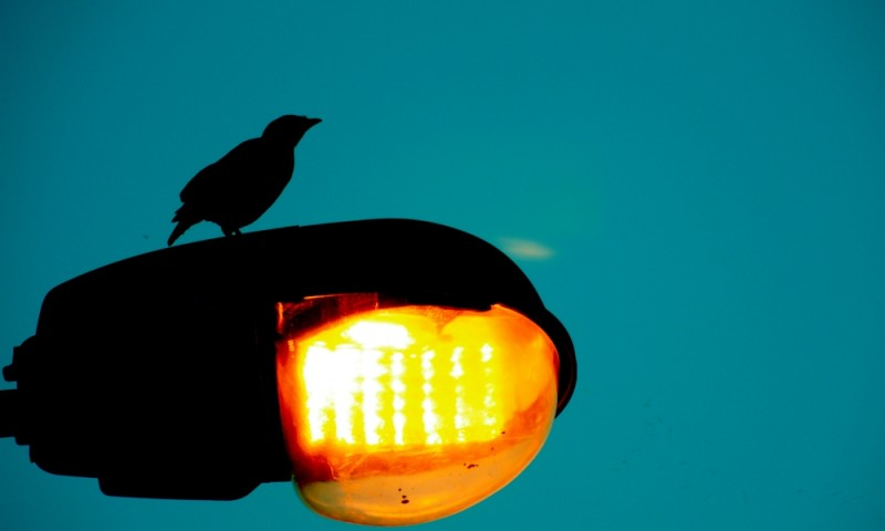 the early bird.