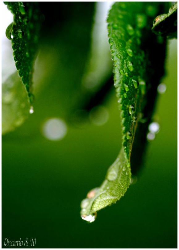 Words of leaves