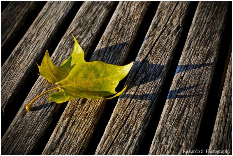 Autumn in leaf