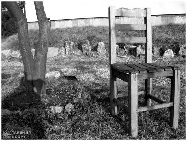 tree & chair