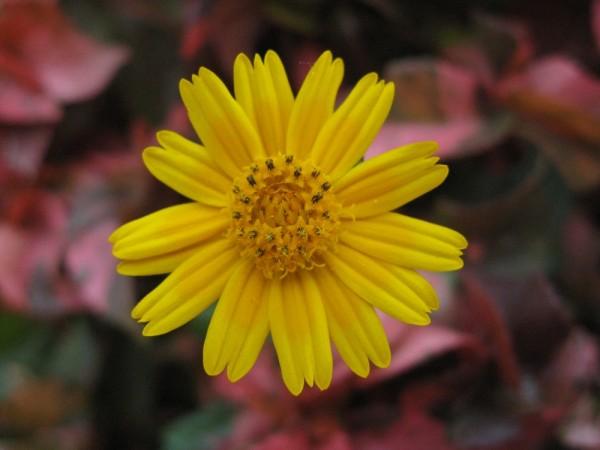 Unique in Yellow
