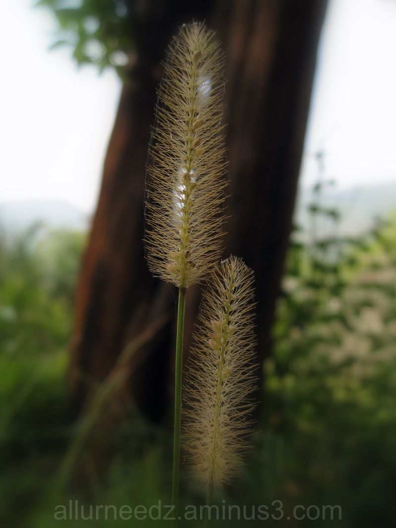 Feather of a plant