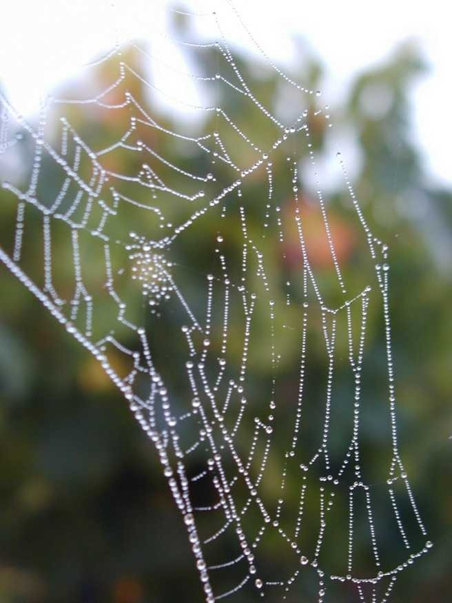 web, dew