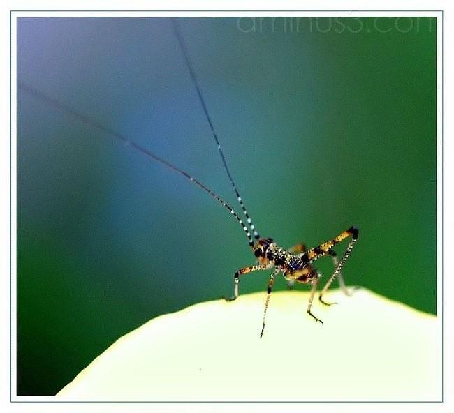 grasshopper macro bug