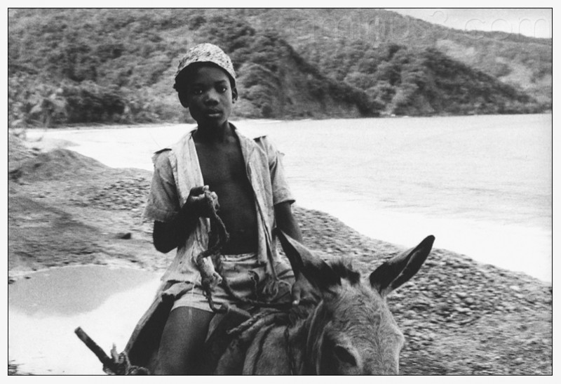 young boy on a donkey in Grand Bay Dominica