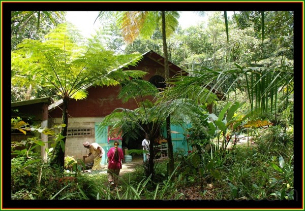 rastafari in Dominica