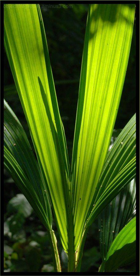 rainforest, dominica, zèl a mouche,