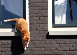 red cat amsterdam