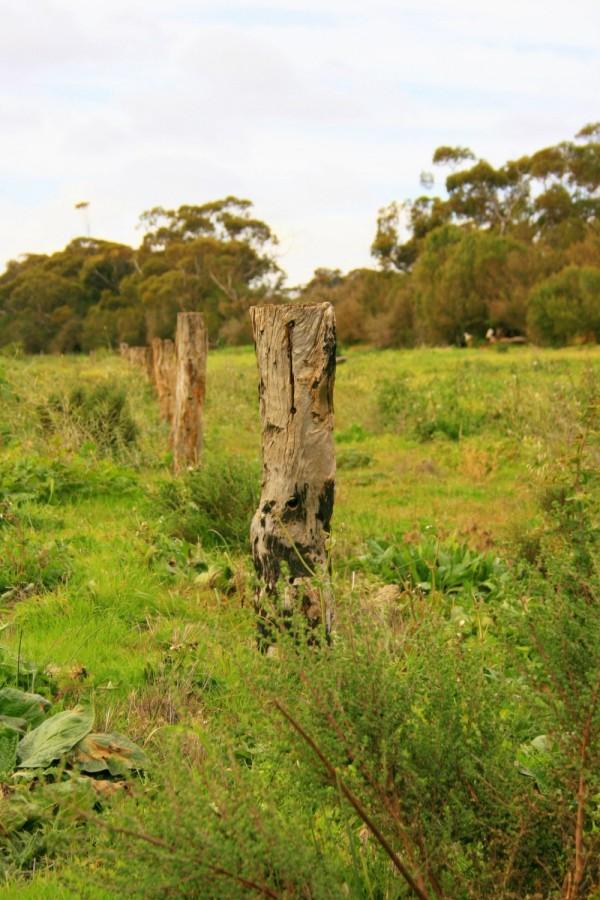 fencepost on farm