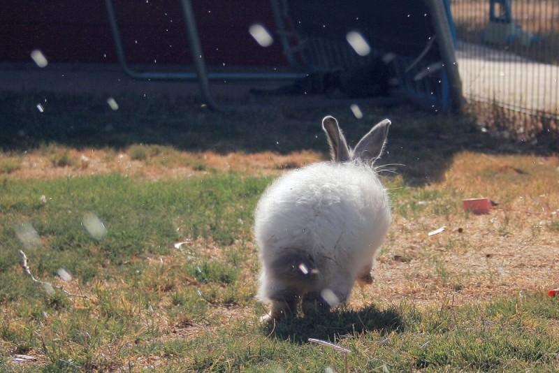 rabbit running water