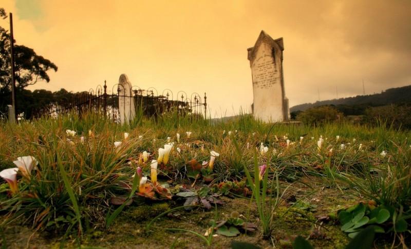 wildflowers in cemetery