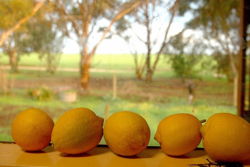 lemons on a windowsill