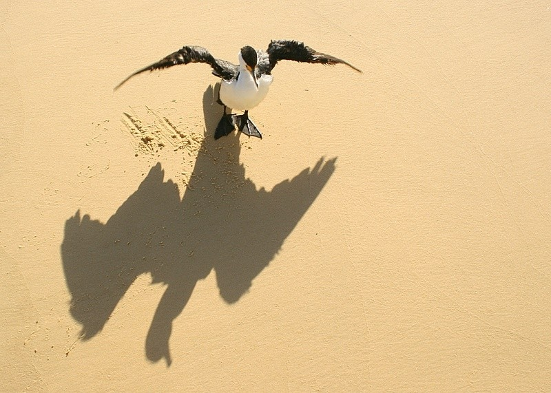 shadow of a bird