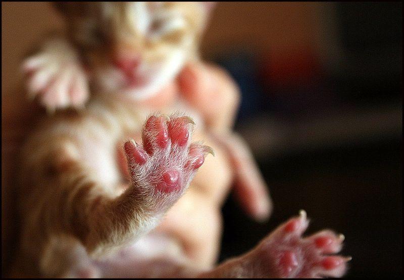 newborn toenails