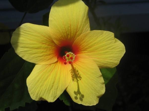 Yellow, yellow handsome fellow!!
