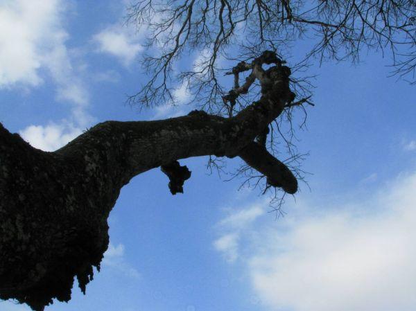 Climb to the heavens ?!