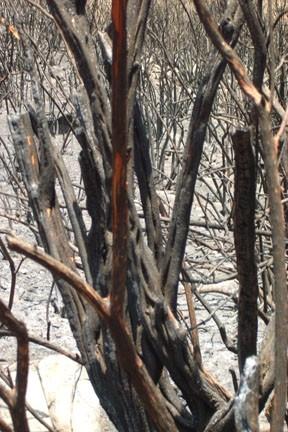 fire ravaged brush