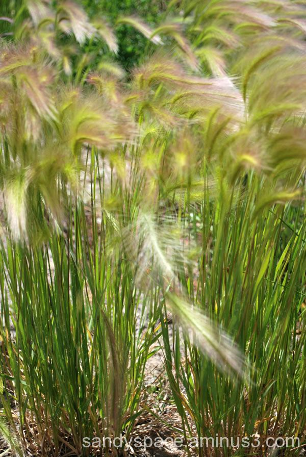 Beautiful breeze flowing thru the mountain grasses