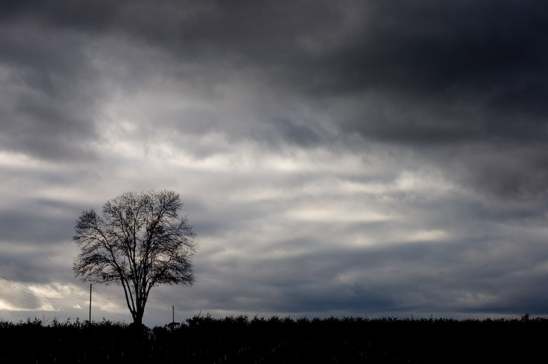 A single tree on a stormy day