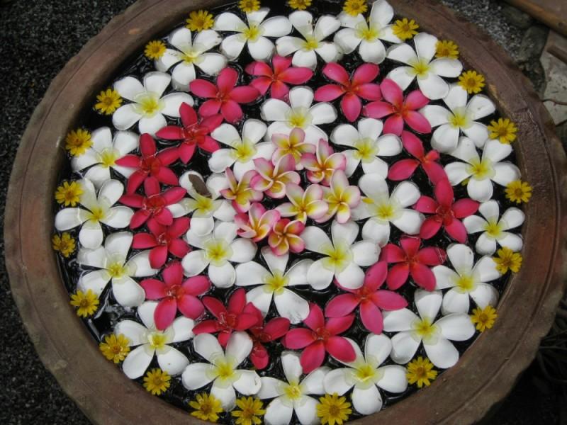 Beautifu Flowers