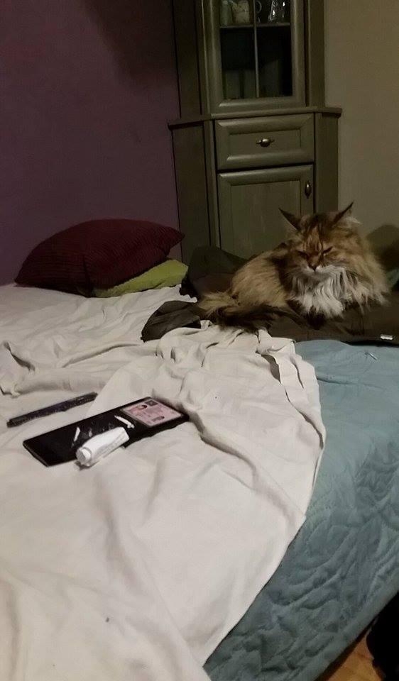 kot co narkotyki jadł