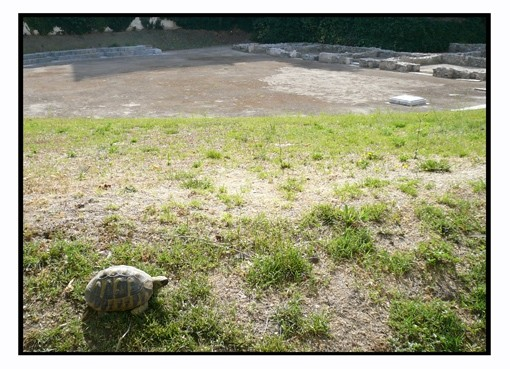A turtle in the place of the ancient theater...
