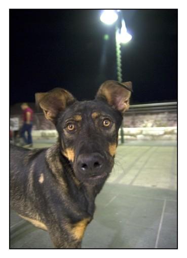 Τhe eyes of dog