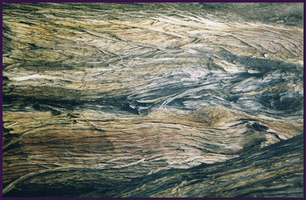 form of wood - 2