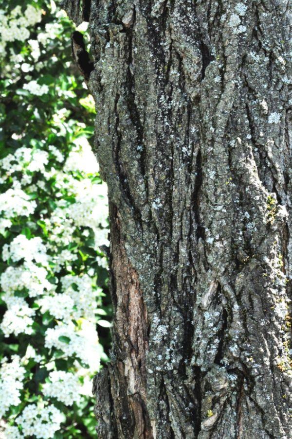 tree, flowers, nature
