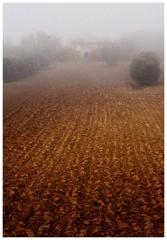 Foggy Land #2