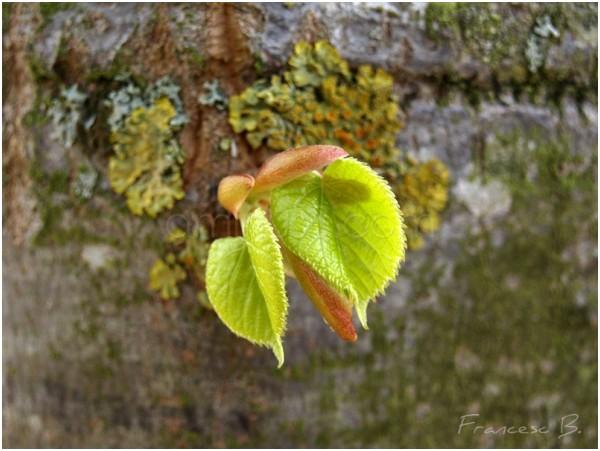 Jeunes feuilles sur tronc