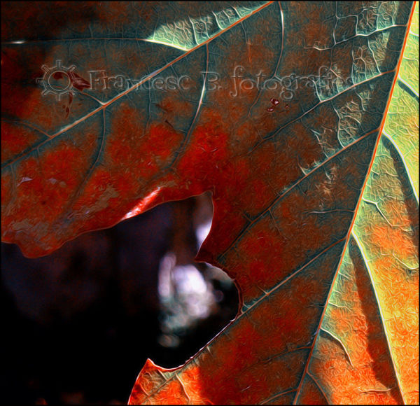 Nervures d'automne