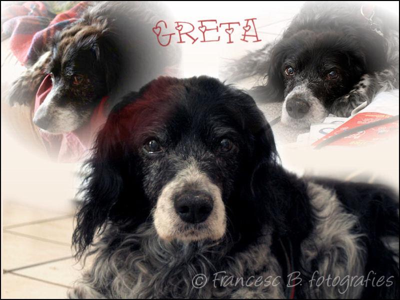 ♥ Adieu Greta ♥  (1991-2009)